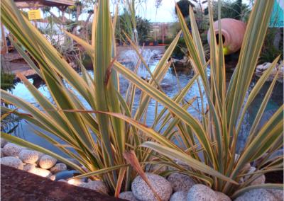 Nature et création bassin et arrosage